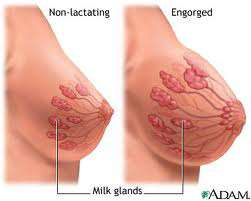 تبدلات الثدي خلال الحمل